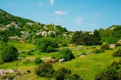 Chevaux sur le pré dans les montagnes de Monténégro, dans le vill photo stock