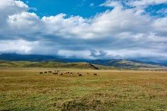 Chevaux sur le pré de montagne en montagnes de Ketmen, Kazakhstan Image libre de droits