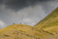 Chevaux sur monter de colline et de tempête photo stock