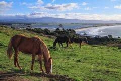 Chevaux sur un pré de colline, avec vue sur la mer à l'arrière-plan Image stock