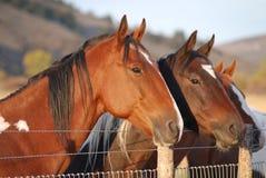 chevaux trois photographie stock