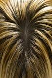 Cheveu blond avec les fonds foncés Image libre de droits