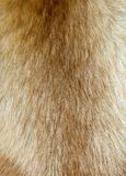 Cheveu de crabot Photo libre de droits