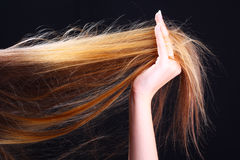 Cheveu de fixation de main. Coiffure Image libre de droits