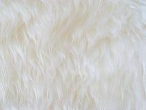 Cheveu synthétique blanc Images libres de droits