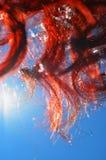 Cheveux bouclés rouges contre le ciel bleu images libres de droits