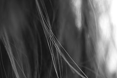 Cheveux dans le black&white, se croisant de la manière symétrique Photo libre de droits