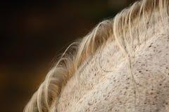 Cheveux de cheval Photographie stock libre de droits