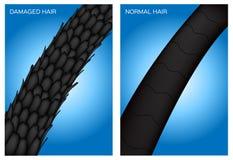 Cheveux endommagés et cheveux normaux images stock