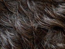 Cheveux naturels d'homme Photographie stock