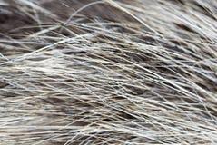 Cheveux sur le chat comme fond Photographie stock libre de droits