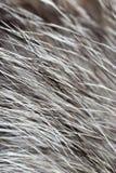 Cheveux sur le chat comme fond Images libres de droits