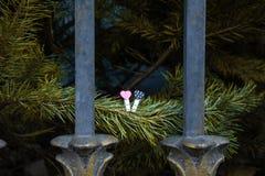 Chevilles de coeur avec le fond de points de polka photo stock