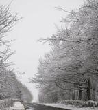 Chevin Forest Park im Winter Lizenzfreies Stockfoto
