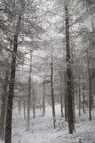 Chevin Forest Park im Winter Lizenzfreies Stockbild