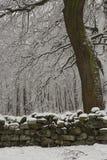 Chevin Forest Park in Otley Stockbild