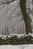 Chevin Forest Park in Otley Stock Image