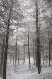 Chevin Forest Park in winter. Scenic view of Chevin Forest Park in winter, Otley, England royalty free stock image