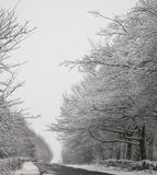 Winter Road. With snow covered trees on either side royalty free stock photo
