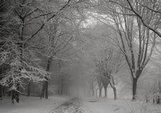 Chevin-Park im Schnee Lizenzfreie Stockbilder