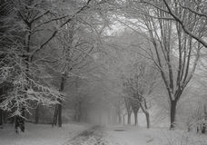 Winter footpath. Woodland, forest snow Royalty Free Stock Images