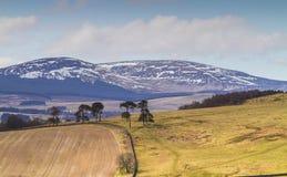 Cheviot-Heuvels, Northumbria, het UK stock afbeelding