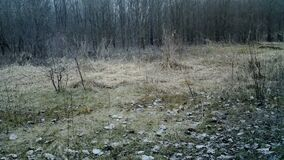 Chevreuil, Capreolus capreolus or Roe deer, in forest in winter day. 1080p Video