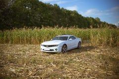 Chevrolet Camaro Foto de Stock