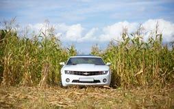 Chevrolet Camaro em um campo de milho Fotografia de Stock