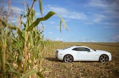 Chevrolet Camaro em um campo de milho Fotografia de Stock Royalty Free