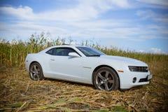Chevrolet Camaro em um campo de milho Foto de Stock