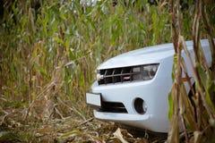 Chevrolet Camaro w kukurydzanym polu Zdjęcia Royalty Free