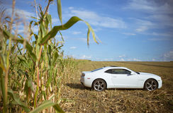 Chevrolet Camaro w kukurydzanym polu Fotografia Royalty Free