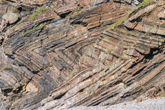 Chevron que dobra-se em estratos geological no abrigo de Millook perto do abrigo de Crackington em Cornualha Imagem de Stock
