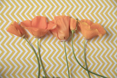 Chevrons and poppies Royalty Free Stock Images