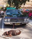 Chevy Chevelle 1969 verde e azul foto de stock royalty free