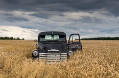 1949 chevy truck abandoned in a field. 1949 vintage cheverolet truck, an old farm truck royalty free stock image