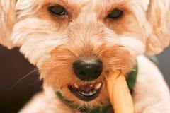 Chew Stock Photo