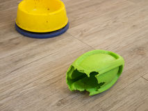 Chewed rugby rubber dog toy and dog bowl Stock Photos