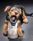 Chewing on a boot