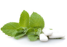 Chewing gum and mint. Chewing gum and fresh leaves of mint on a white background stock photos