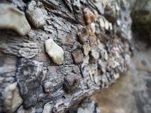 Chewing-gum sur des barres Photographie stock libre de droits