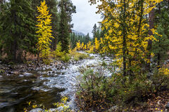 Chewuch River in Autumn. Royalty Free Stock Photo