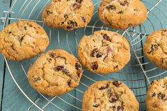 Chewy cranberry cookies. Chewy cranberry, fruit,nut,white choc cookies on the round cooling rack stock image