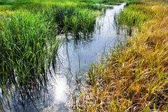 Cheyenne Bottoms Wildlife Refuge Grassland-Moeras Stock Afbeelding