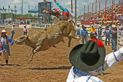 Cheyenne Frontier Days. Bull Riding at Cheyenne Frontier Days stock image