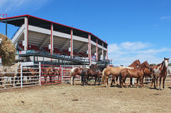 Cheyenne Frontier Days. A corral of horses outside of the rodeo stands at Cheyenne Frontier Days. The event claims to be one of the largest of its kind in the stock image