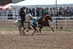 Cheyenne Frontier Days Rodeo 2013 Lizenzfreie Stockfotos