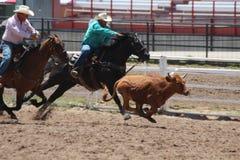 Cheyenne Frontier Days Rodeo 2013 Royalty-vrije Stock Fotografie