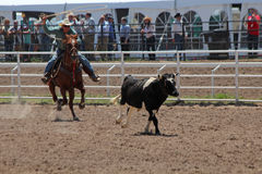 Cheyenne Frontier Days Rodeo 2013 Royalty Free Stock Photography